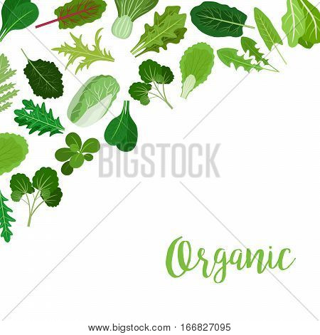 Organic banner with salad vegetable leaves for cooking design and websites. Vector illustration