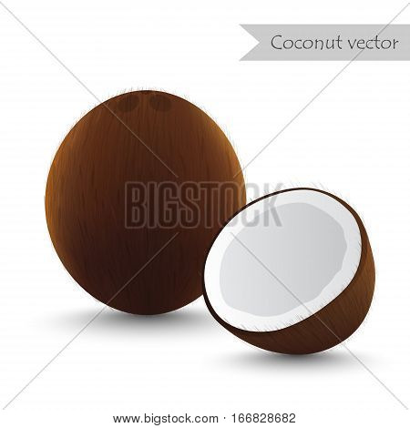 Coconut vector isolated on white background.Half Coconut.