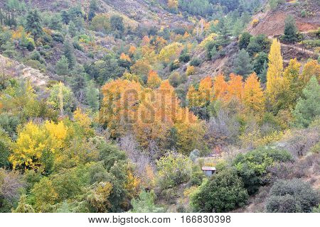 CYPRUS: Beautiful Autumn colors in Troodos mountains