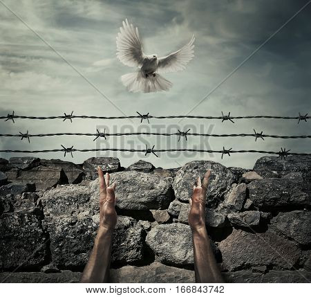 Man arms on a stone wall fence background with barbed wire on top as a convict in a prison rise hands to the sky on a flying pigeon. Need forgiveness liberation and pacification concept.