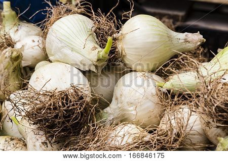 a lot of onions on a market