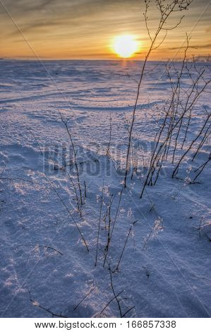 Small backlit plants stick up from the snow at sunset in north Idaho.