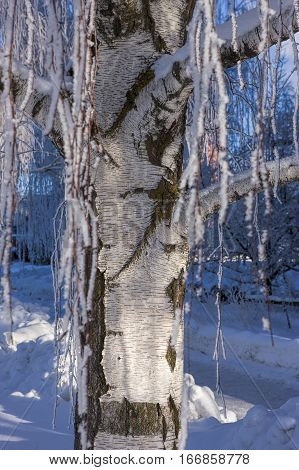 Close up of tree trunk in winter in Moscow Idaho.