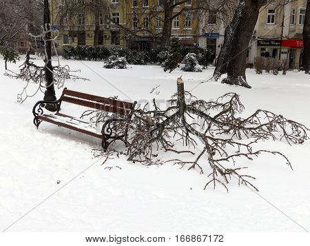 VARNA, BULGARIA - JANUARY 27, 2014: Broken tree branches on the ground from the heavy ice storm in Varna Bulgaria.