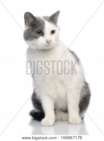 Studio Shot Of An Adorable Cat