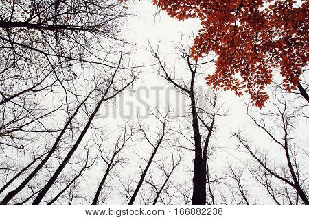 Autumn Tree With Red Leaves