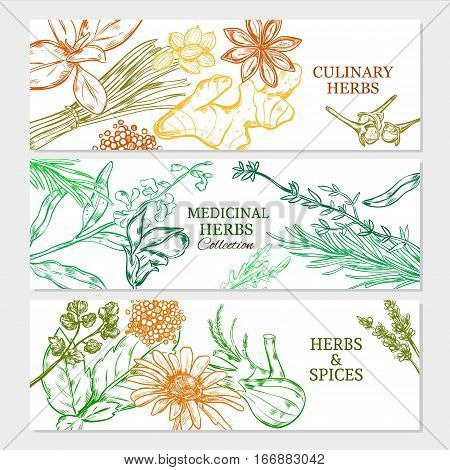 Natural healthy plants horizontal banners with medicinal culinary herbs and spices in sketch style vector illustration