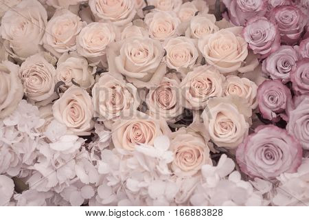 Beautiful collection of roses in soft pastel colors