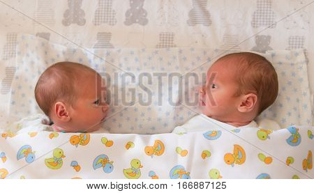 Newborn beautiful baby twins awake looking at each other in their cot