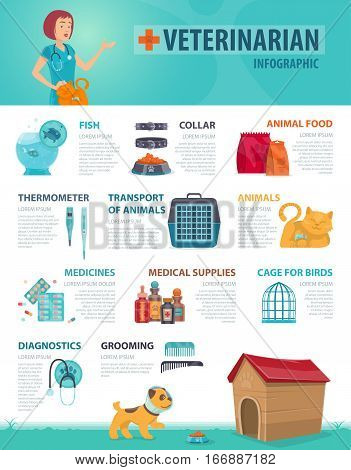 Colorful vet infographic concept with animal products equipment and medical supplies for pets vector illustration