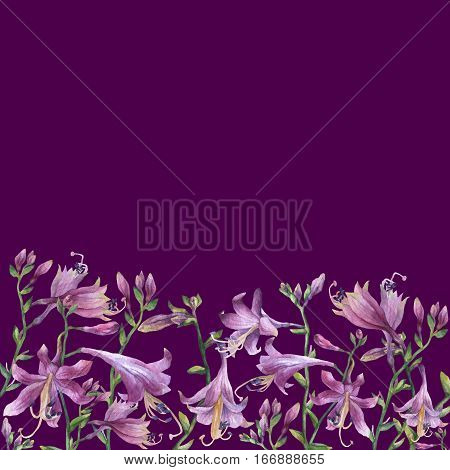 The frame of the branches with purple hosta flower. Lilies. Hosta ventricosa minor, asparagaceae family. Hand drawn watercolor painting on purple background.