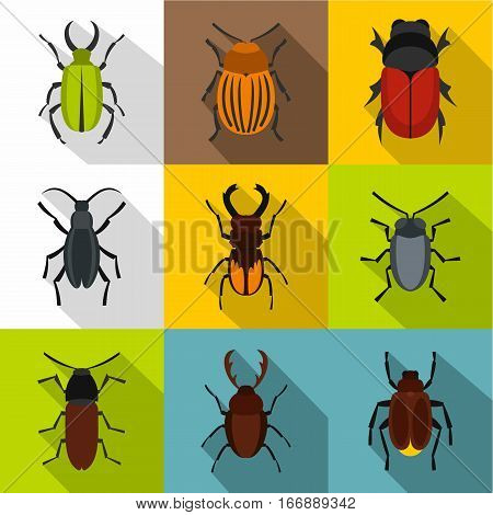 Order coleoptera icons set. Flat illustration of 9 order coleoptera vector icons for web