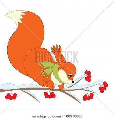 Vector cartoon squirrel on ash berry branch