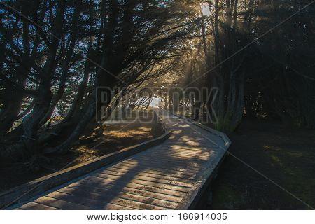 A Sun lit Boardwalk through Dark Woods