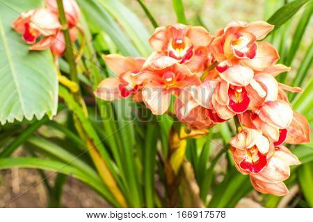orange cymbidium flower , beauty in nature