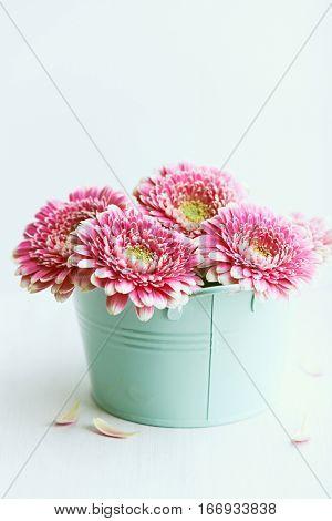 Pink gerbera daisy flowers in a vintage pot