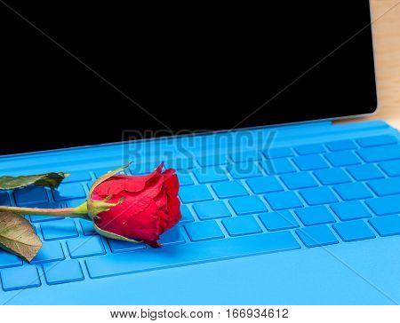Red Rose Flower On Blue Typer Laptop