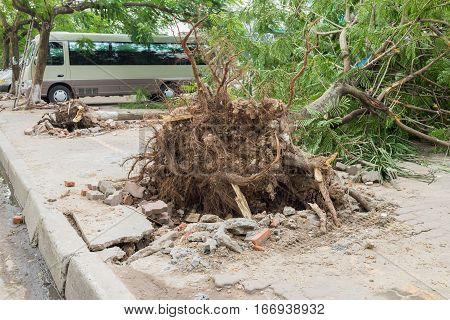 Fallen Tree Damaged On Street By Natural Heavy Wind Storm