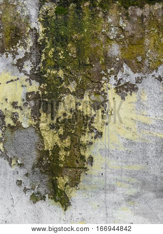 Grungy wall background. Paint cracking off wall with mold and moss underneath.