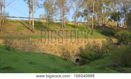 Retaining Wall Below Eucalyptus Trees