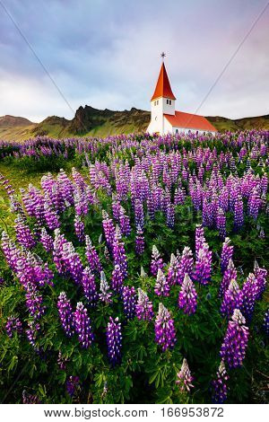 Great view of Vikurkirkja christian church in evening light. Dramatic and picturesque scene. Popular tourist attraction. Location famous place Vik i Myrdal village, Iceland, Europe. Beauty world.