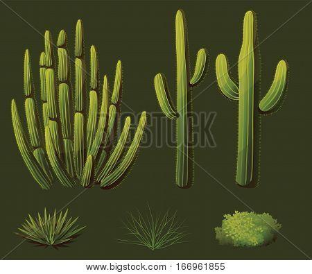 Set of plants growing in the desert of Arizona