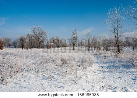 Winter beautiful landscape with trees and grass covered with hoarfrost, Kiev, Ukraine