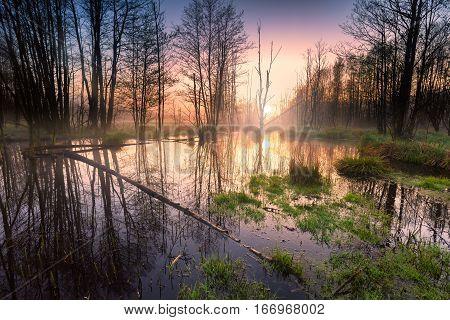 Sunrise Over Wetlands