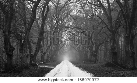 Snow-covered road in a gloomy forest. Black and white version.