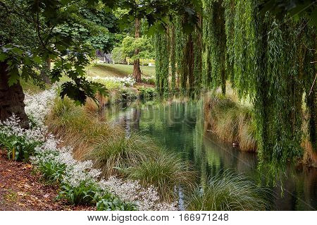 Along the Avon River in Christchurch, New Zealand