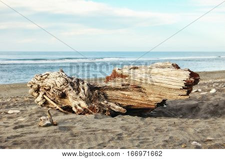 Driftwood on the Hokitika Beach of the West Coast of the South Island of New Zealand