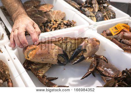 Galician Crab