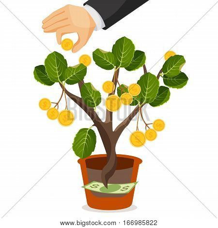 Money tree with golden coins. Assets useful or valuable thing growing in a pot from dollar banknote. Hands collect money from tree. Financial deposits business concept. Realistic vector illustration