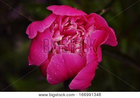 Summer. Rain. The origin of the flower