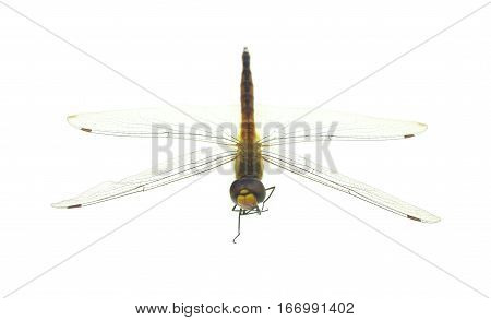 Dragonfly on a white background animals dragonfly