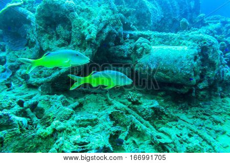 Underwater on the wreck. Fish on the wreck SS Thistlegorm.