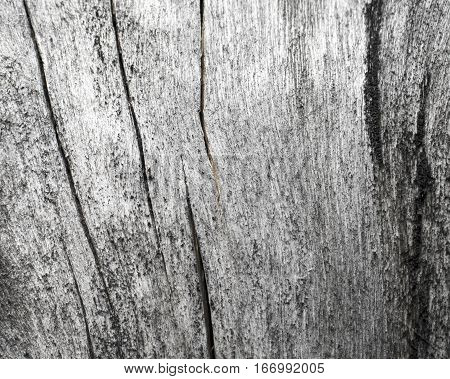 Wooden texture close up photo. White and grey wood background. White old tree near the sea. Curves and lines on rustic timber. Rough timber texture. Sea wood backdrop. Natural old tree on the beach