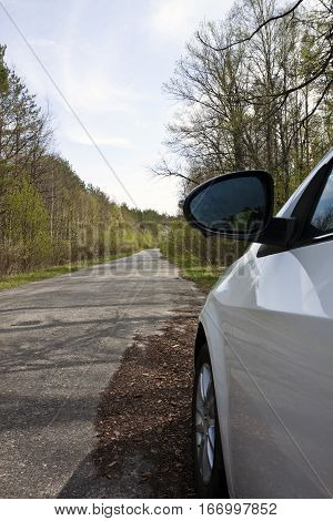 white car in a forest on a road