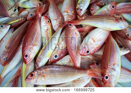 Red tropical fishes on the market. Red and yellow colored exotic fishes. Fish pile on the table display. Fresh fisherman catch for dinner. Fish for cooking. Red mackerel ingredient. Closeup fish meat