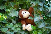cute stuffed animal monkey swinging on ivy liana poster
