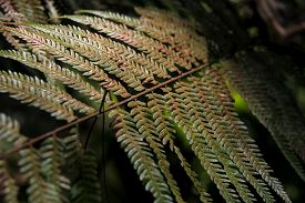 Thick Green Leaf Fern with soft light in Chiang Mai Thailand