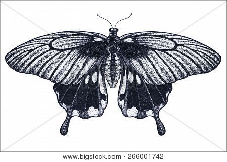 Beautiful Butterfly Tattoo Sketch. Tropical Butterfly. Papilio Memnon. Dotwork Vector Tattoo. Tradit