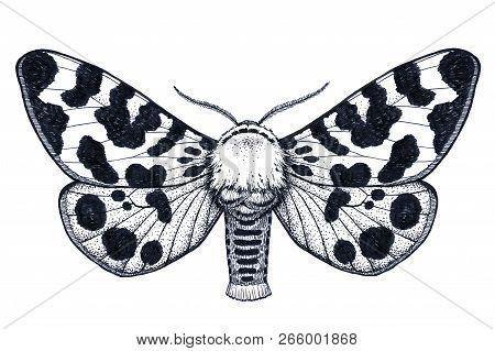 Hand Drawn Butterfly Tattoo. Dotwork Tattoo. Arctia Caja Americana. Mystical Symbol Of Freedom, Beau