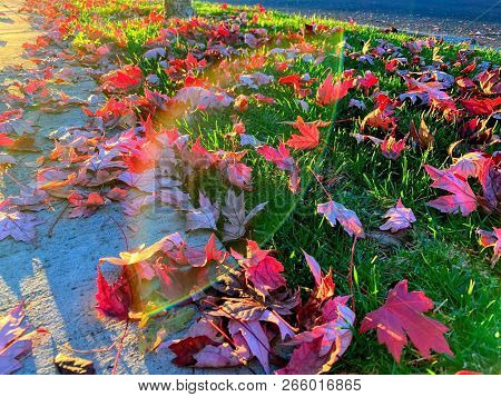 An Abstract Image Of Red Leaves On The Grass Along A Sidewalk.