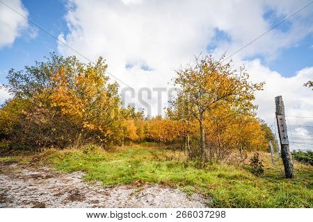 Trees In Orange Colors In The Fall With A Fence To The Right In Bright Daylight