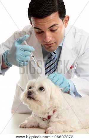 Vet Medicating Small Dog Needle