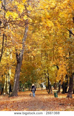 Woman walking her dog in the park alley in fall time poster