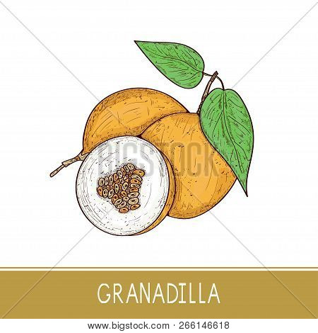 Granadilla. Exotic Fruit. Sketch. On A White Background. Color.