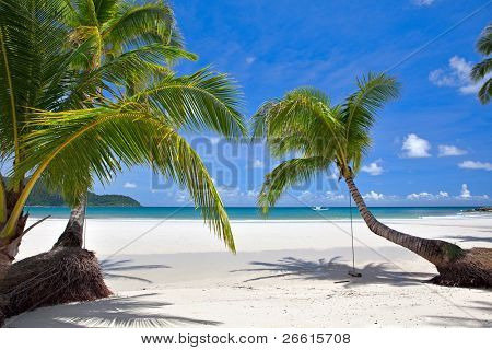 Palm tree leafs on a tropical beach