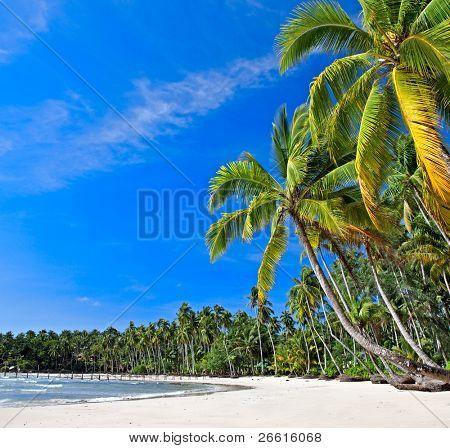 Beautiful tropical beach in the Islands